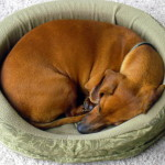 Your Furry Friend Deserves A Comfortable Dog Bed